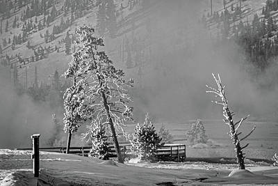 Photograph - Leaning Trees By The Thermal - Yellowstone by Stuart Litoff