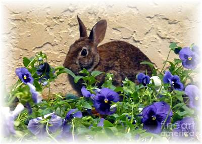 Photograph - Leap Year Easter Bunny by Barbie Corbett-Newmin