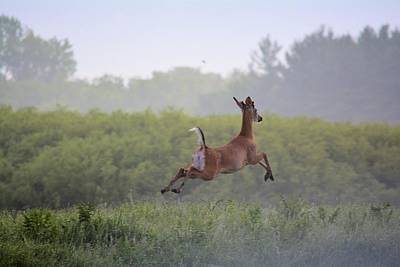 Photograph - Leaping Away by Bonfire Photography