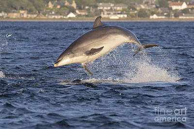 Photograph - Jolly Jumper - Bottlenose Dolphin #40 by Karen Van Der Zijden