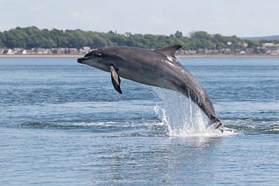 Art Print featuring the photograph Leaping Dolphin - Moray Firth, Scotland by Karen Van Der Zijden
