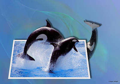 Orca Digital Art - Leaping Orcas by Roger Wedegis