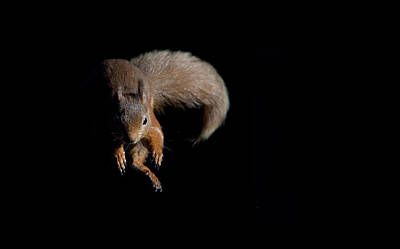 Photograph - Leaping Out Of The Shadows by Peter Walkden