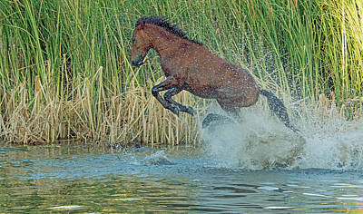 Photograph - Leaping Wild Horse by Tam Ryan