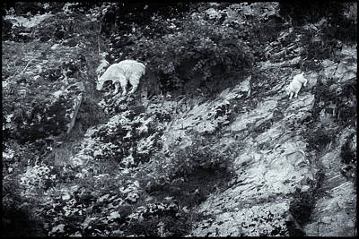 Photograph - Learning The Hard Way Bw by Belinda Greb