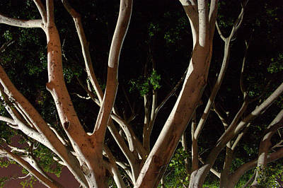 Photograph - Learning Tree by Brad Scott