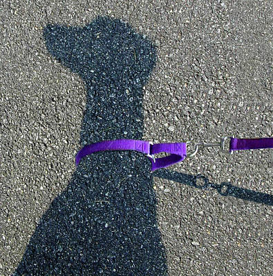 Photograph - Leash Required On Sunny Days by Art Cole