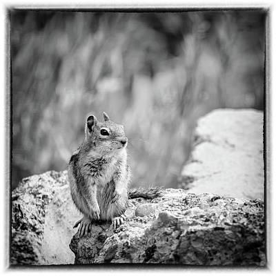 Photograph - Least Chipmunk On The Rocks by Debra Martz