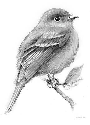 Animals Drawings - Least Flycatcher by Greg Joens