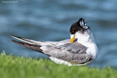 Digital Art - Least Tern 6156 by Kevin Chippindall