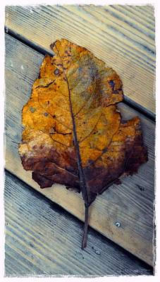 Photograph - Leathery Leaf by Patricia Strand
