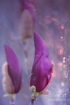 Photograph - Leave A Little Sparkle Wherever You Go by Linda Lees
