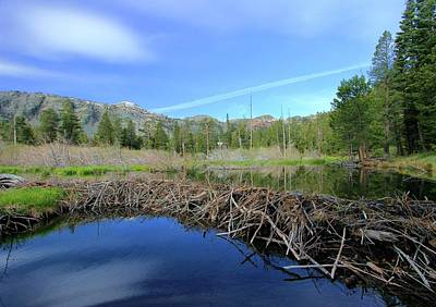 Photograph - Leave It To Beaver by Sean Sarsfield