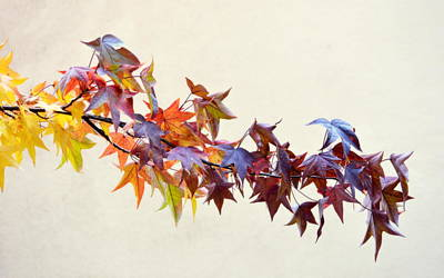 Photograph - Leaves Of Many Colors by AJ Schibig