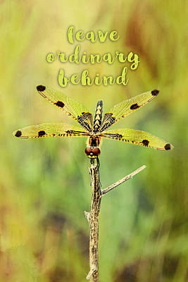 Photograph - Leave Ordinary Behind Dragonfly  by Christina VanGinkel