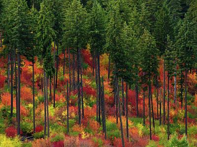 Photograph - Leavenworth Checkerboard by Dan Mihai