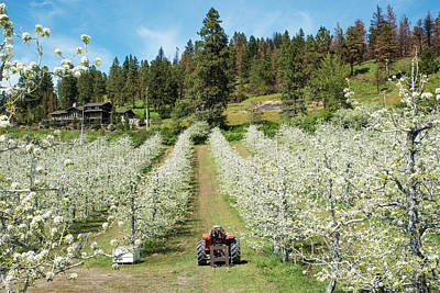 Photograph - Leavenworth Orchard by Tom Cochran