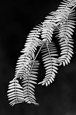 Leaves-1-st Lucia Art Print by Chester Williams