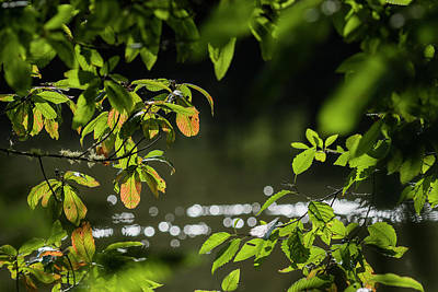 Photograph - Leaves Along The River by Robert Potts