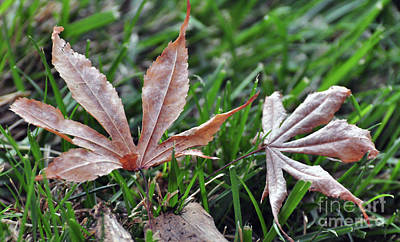 Photograph - Leaves Amidst The Grass by Debby Pueschel