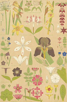 Leaves And Flowers From Nature Art Print by English School