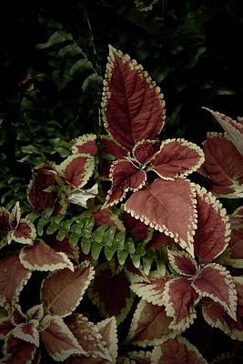 Photograph - Leaves And Fronds by Tim Good
