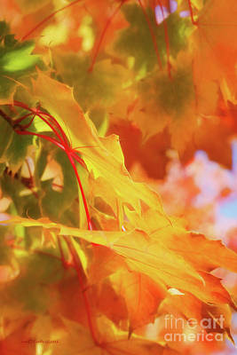 Photograph - Leaves And Light by Jean OKeeffe Macro Abundance Art