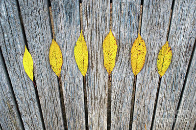 Photograph - Leaves And Lines by Tim Gainey