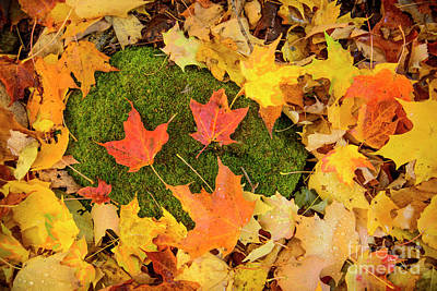 Maine Art Photograph - Leaves And Moss Covered Rock by Alana Ranney