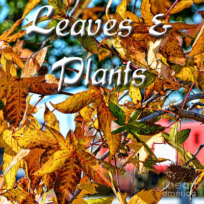 Photograph - Leaves And Plants Logo by Debbie Portwood
