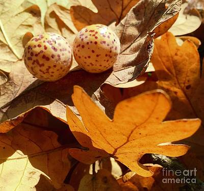 Photograph - Leaves And Pods Of Fall by Susan Garren