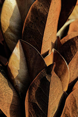 Photograph - Leaves And Shadows by Steve Gravano