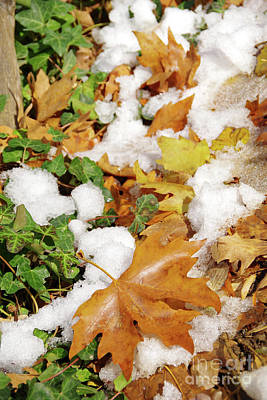 Winter Photograph - Leaves And Snow by George Atsametakis
