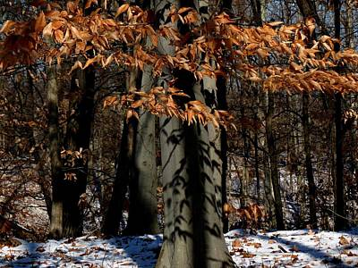 Photograph - Leaves And Snow by Robert Papps