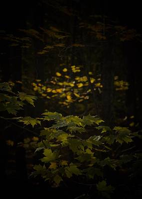 Photograph - Leaves And Sun by Tim Good