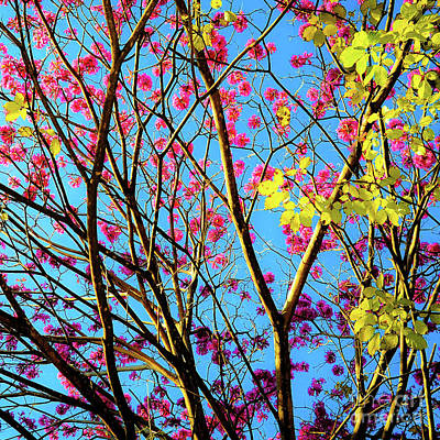 Art Print featuring the photograph Leaves And Trees 980 by D Davila