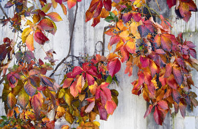 Leaves And Vines Art Print by Donald Schwartz