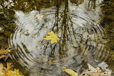 Autumn Leaf Photograph - Leaves And Water by Andrew McElvery