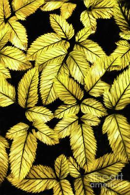 Digital Art - Leaves Ap by Dan Carmichael