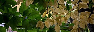 Landscape Photograph - Leaves by April Bielefeldt