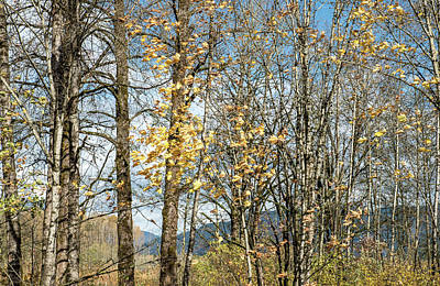 Photograph - Leaves Are Leaving by Tom Cochran