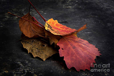 Focus On Foreground Photograph - Leaves by Bernard Jaubert