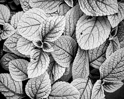 Leaves Black And White - Nature Photography Art Print by Ann Powell
