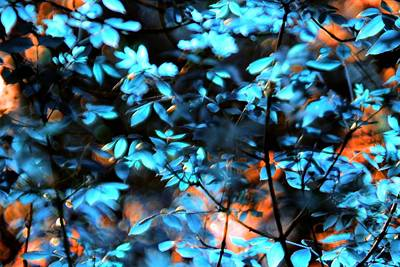 Digital Art - Leaves Blue And Orange by Ajp