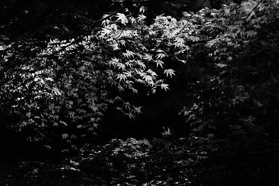 Photograph - Leaves Catch The Light by Roy Cruz