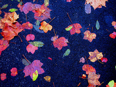 Leaves Art Print by Christopher Woods
