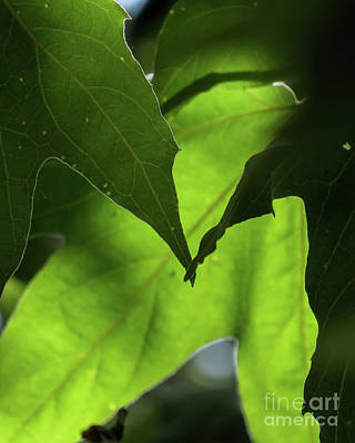 Photograph - Leaves by Christy Garavetto