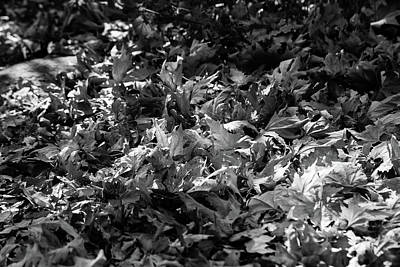 Photograph - Leaves During Autumn In Black And White by Yoel Koskas