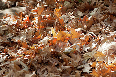 Photograph - Leaves During Autumn by Yoel Koskas