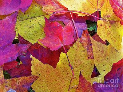 Photograph - Leaves Falling Softly by Lisa Gilliam